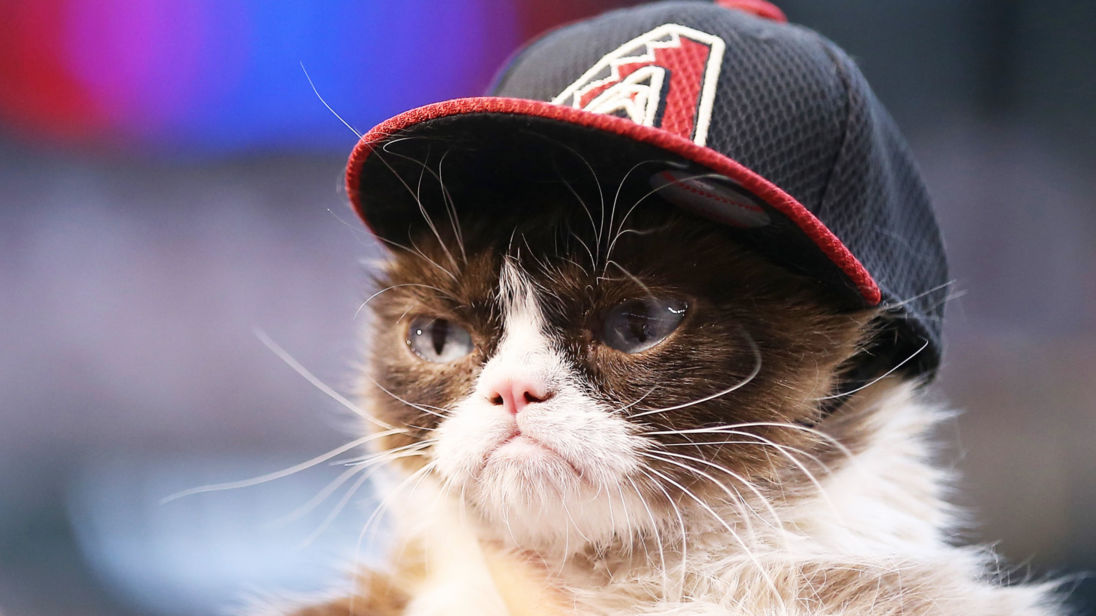PHOENIX, AZ - APRIL 04:  'Grumpy Cat' on the field before the MLB opening day game between the Colorado Rockies and the Arizona Diamondbacks at Chase Field on April 4, 2016 in Phoenix, Arizona.  (Photo by Christian Petersen/Getty Images)